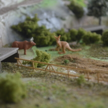 zoo-iv